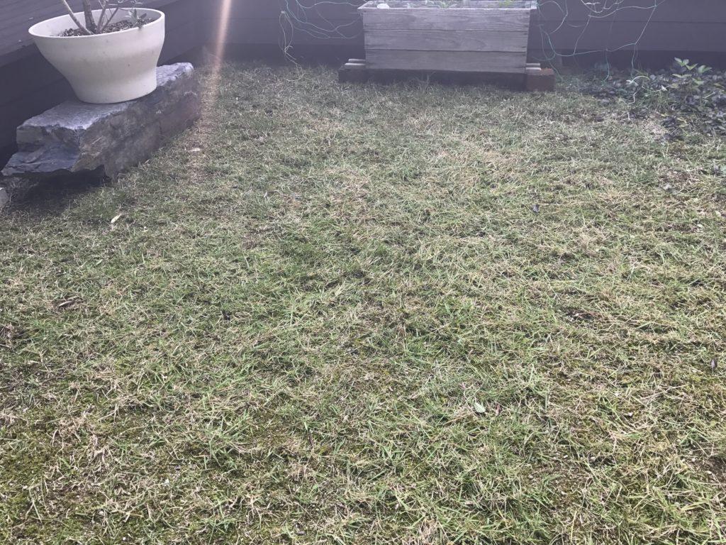 芝刈り後の風景