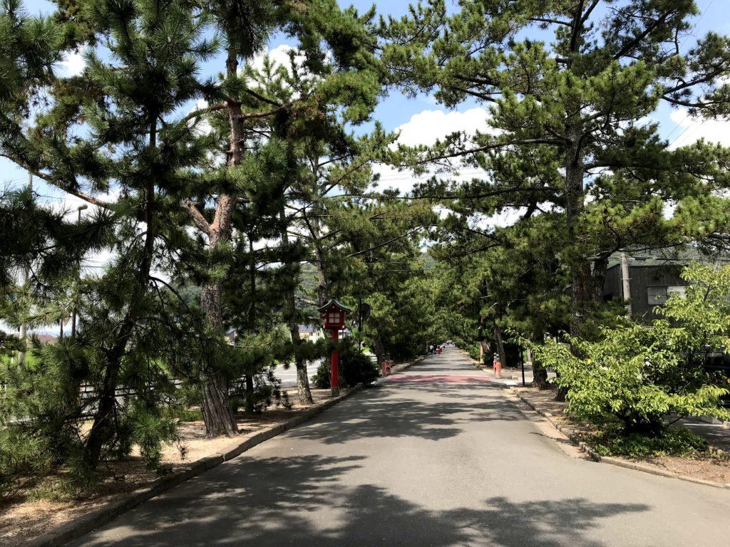 吉備津神社の松並木の参道