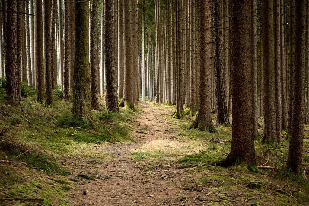 森の中の風景写真