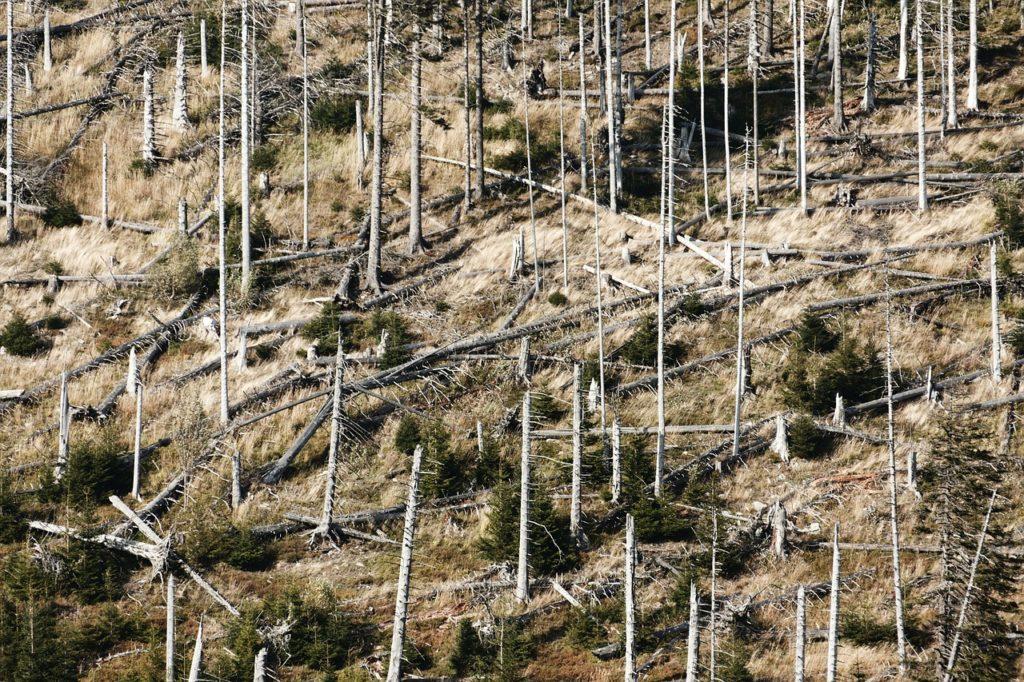 木が枯れた山肌の写真