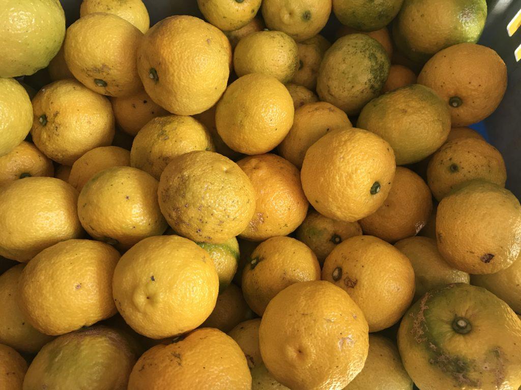 収穫された柚子