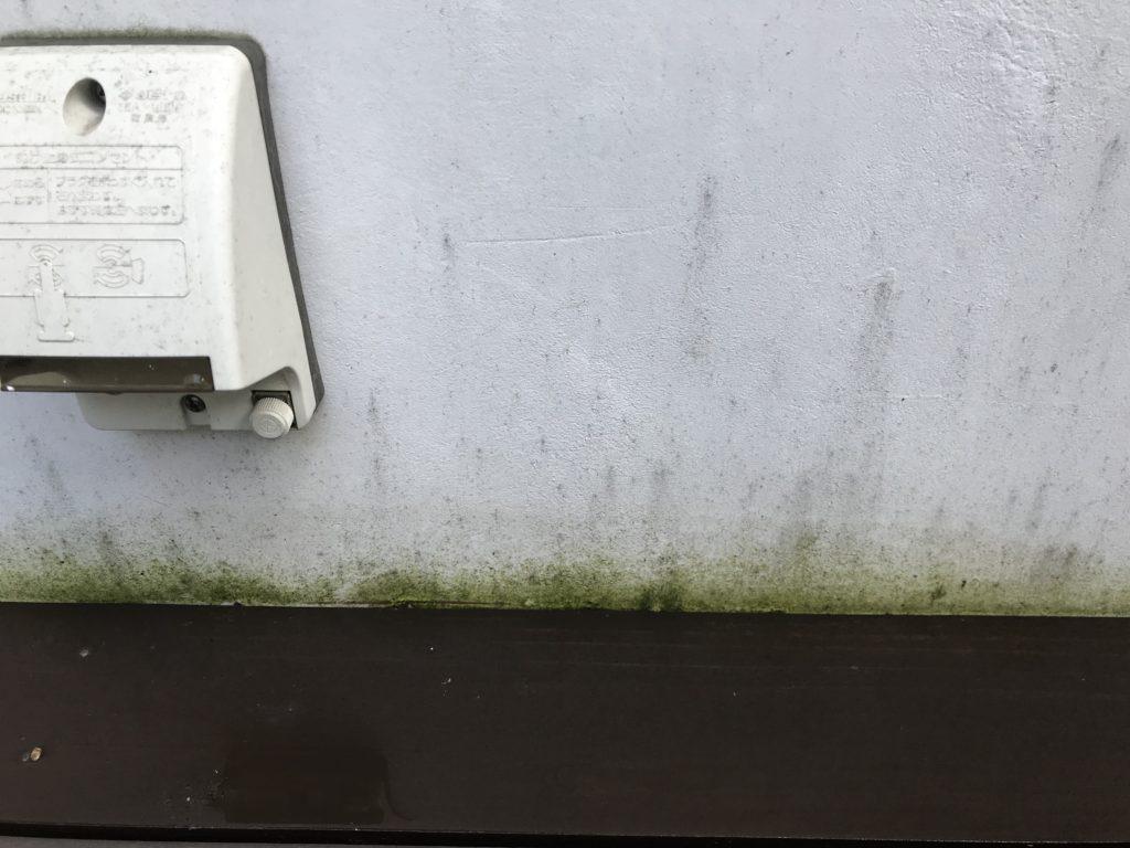 苔で汚れた白い壁