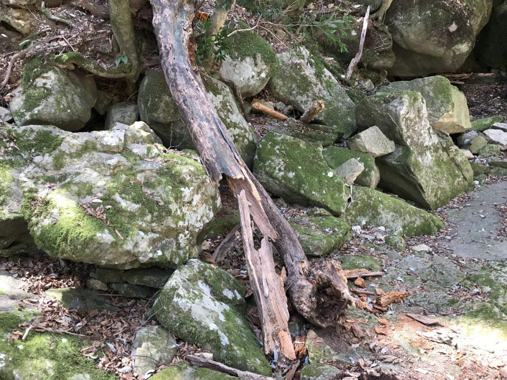 【滑床渓谷】の探勝歩道の倒木