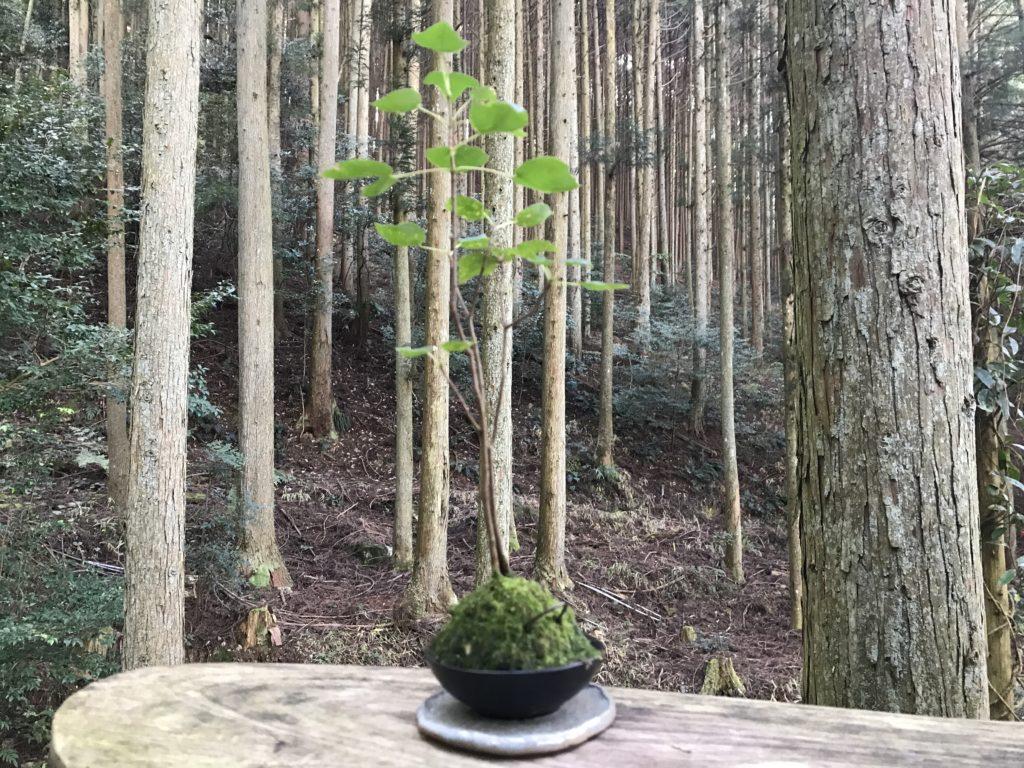 『こけむしろ』の苔庭にある鉢植え