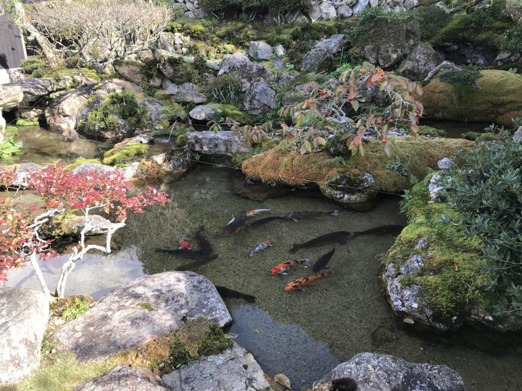 『こけむしろ』の苔庭の隣へ続く庭にある池