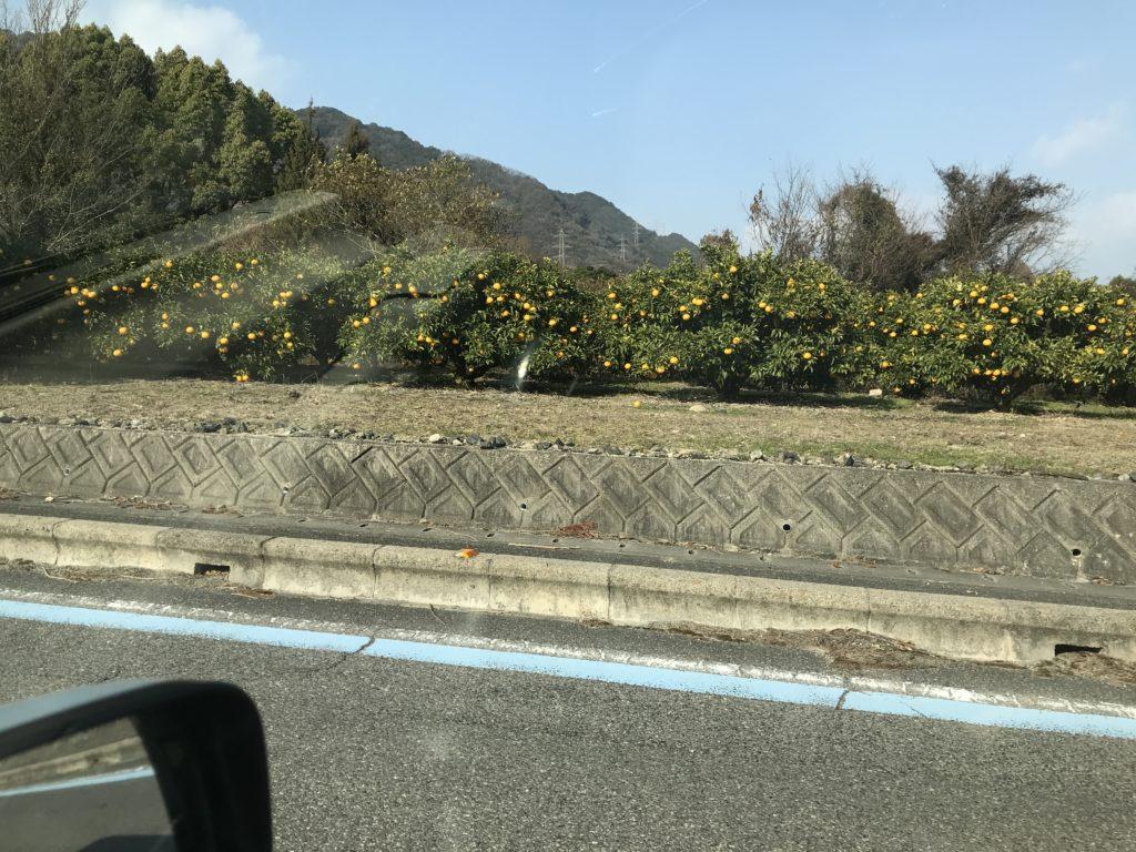大山祇神社までの道のりの風景